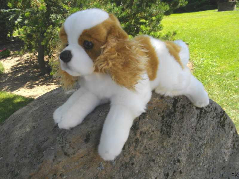 tapete zoo hund teddy - photo #45