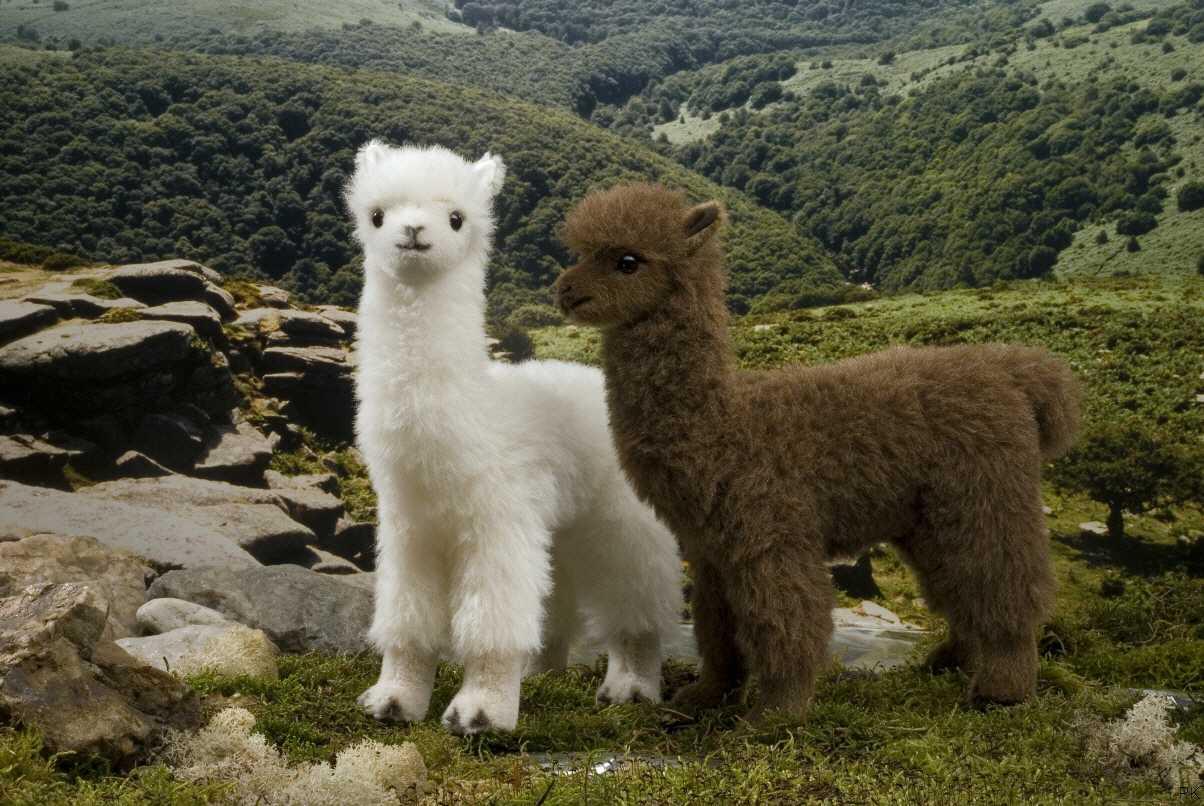 Kuscheltier alpaka wei oder braun - Alpaka kuscheltier ...